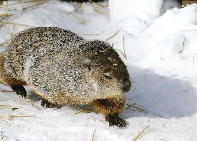 """Little Sprouts Nature Class - """"Animals in Winter"""""""