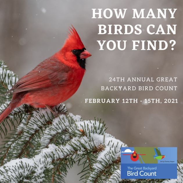 Virtual: Introduction to the Great Backyard Bird Count
